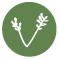 verde-icon